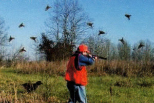 Quail bird dog hunting alabama
